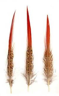 "Golden Pheasant Red Tips (Medium 6-8"") - Per 100"