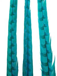"Reeves Pheasant Tail Feathers 35-40"" Dyed Turquoise - Each"