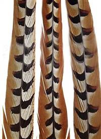 "Reeves Pheasant Tail Feathers 60-65"" - Each"