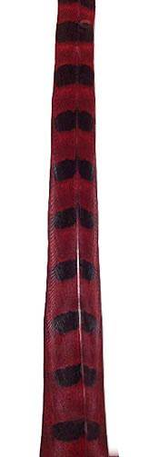"Ringneck Pheasant Tail Feathers 30-32"" Dyed Red - Each"