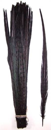 "Ringneck Pheasant Tail Feathers 20-22"" Dyed Black - Each"