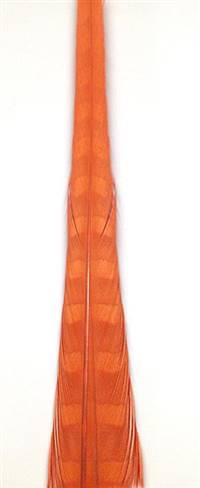 "Ringneck Pheasant Tail Feathers 20-22"" Dyed Orange - Each"