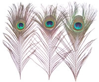 "8""-12"" Small Peacock Feather Eyes (Pack of 100)"
