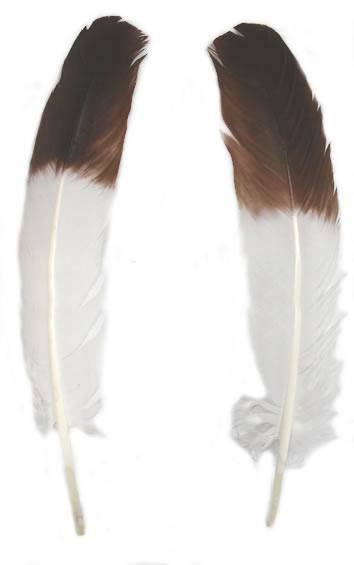 Brown Eagle Tipped Turkey Rounds - Per lb