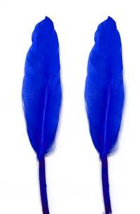 "Duck Cochottes Dyed Royal Blue 3-4"" - Per lb"