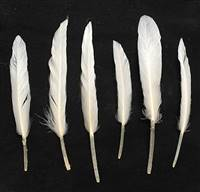 "Duck Pointers 6-10"" Bleached White - Per lb"