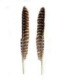 "Barred Turkey Pointers 7-16"" - Per Set"