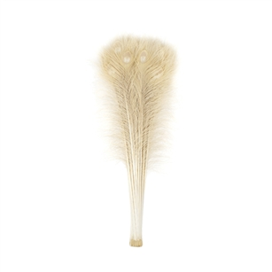 "Dyed Ivory Peacock Feathers 35""-40"" (Pack of 100)"