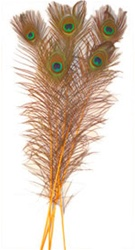"Dyed Gold Peacock Feathers 35""-40"" (Pack of 100)"