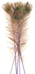 "Dyed Purple Peacock Feathers 35""-40"" (Pack of 100)"