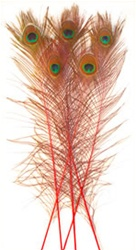 "Dyed Red Peacock Feathers 35""-40"" (Pack of 100)"