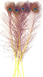 "Dyed Yellow Peacock Feathers 35""-40"" (Pack of 100)"