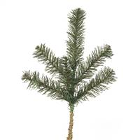 "14"" Canadian Pine Spray 6 Tips"