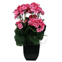 "18"" Pink Geranium in Black Pot"
