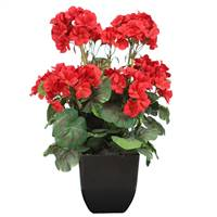 "15"" Red Geranium Bush in Black Pot"