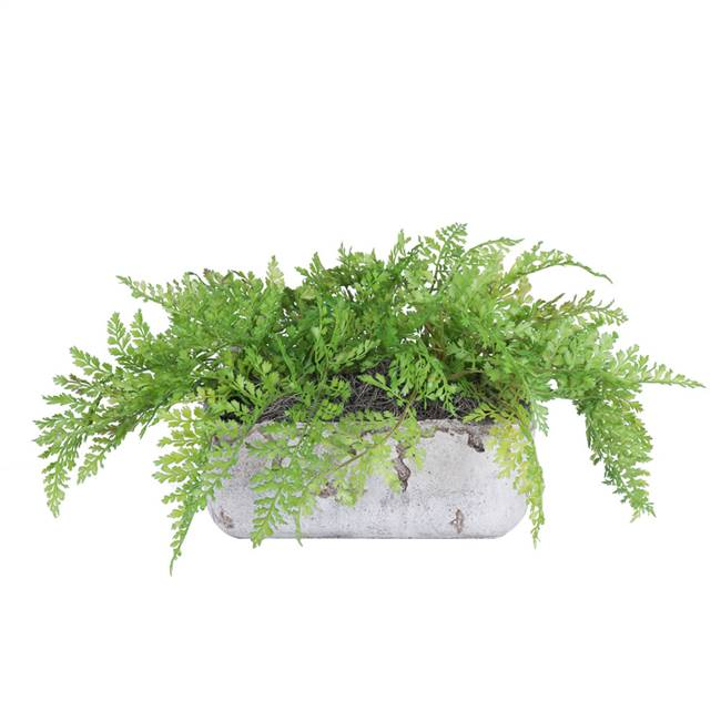 "10"" Fern in Cement Rectangle"