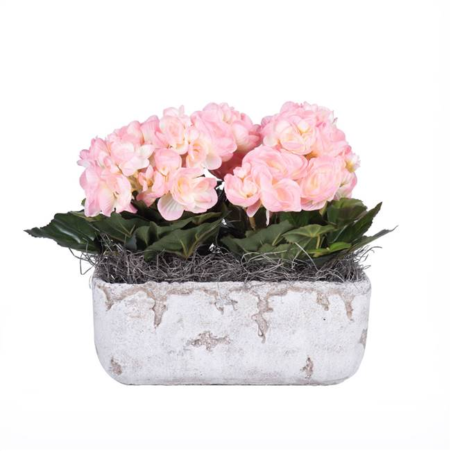 "10"" Pink Begonia in Cement Rectangle"