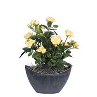 "13.5"" Yellow Mini Rose in Oval Container"