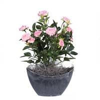 "13.5"" Lt Pink Mini Rose Oval Container"