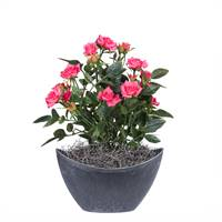 "13.5"" Hot Pink Mini Rose Oval Container"