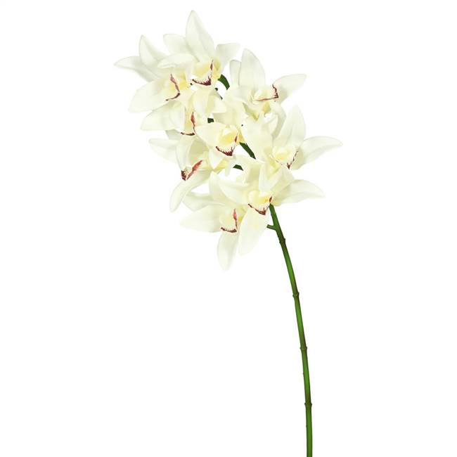 "29"" Cream Real Touch Cymbidium Orchid"