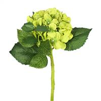 "15""Short Stem Hydrangea x 2-Green (Pk/3)"
