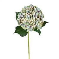 "33"" Green Hydrangea Spray (2/pk)"