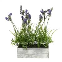 "15"" Lavender Plant in Wood Rectangle Pot"