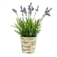 "16.5"" Lavender in Round Paper Pot"