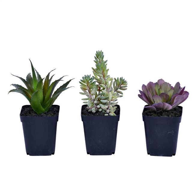 "7"" Green Potted Succulent Set/3"