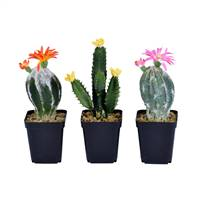 "8""Green Potted Cactus Set/3"