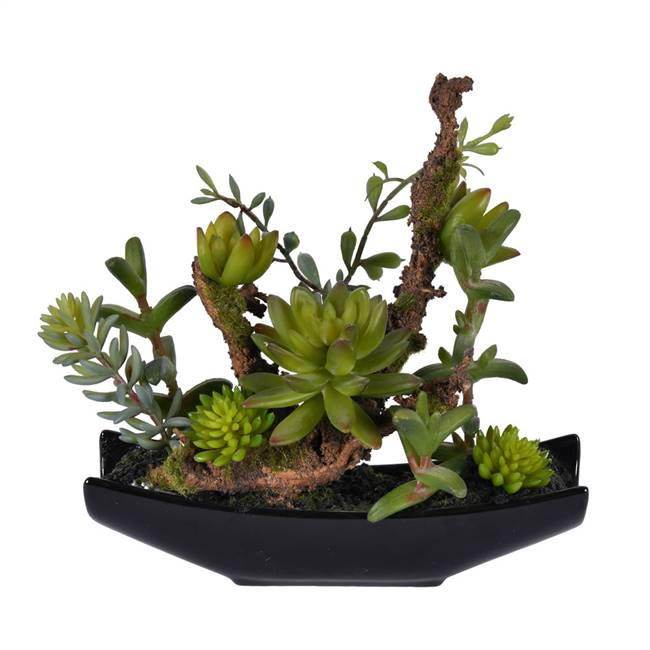 "8"" Green Mixed Succulent in Ceramic Pot"