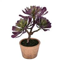 "12"" Purple/Green Succulent in Paper Pot"