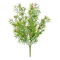"20"" Pink Woodruff Bush UV"