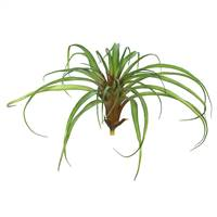 "7"" Tillandsia-Green (PK/3)"