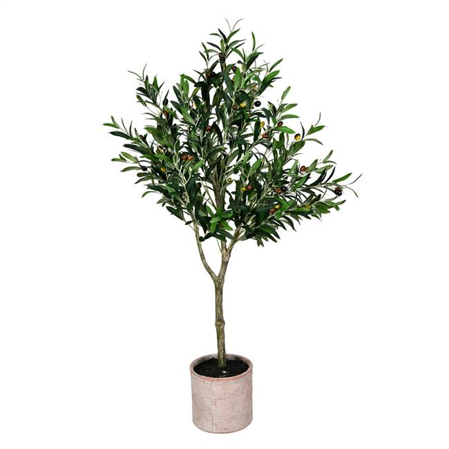 4' Green Potted Olive Tree