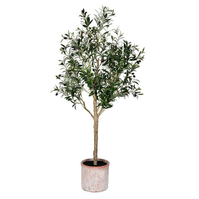 5' Green Potted Olive Tree