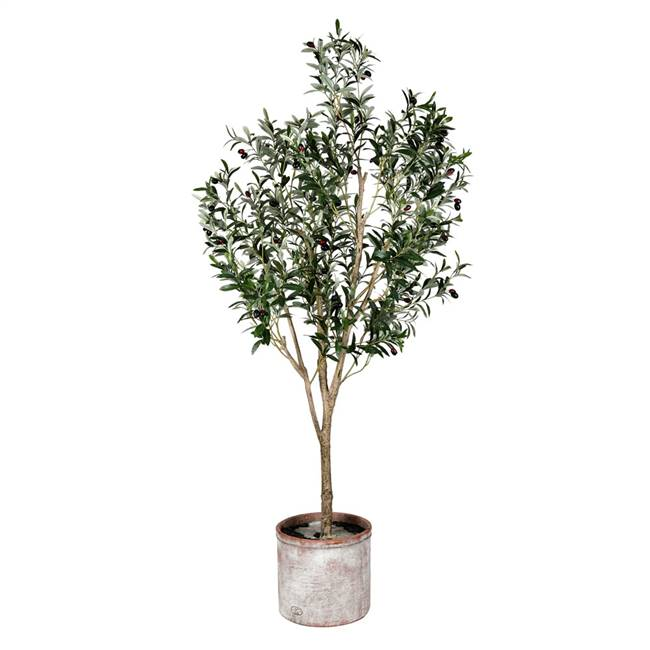 6' Green Potted Olive Tree