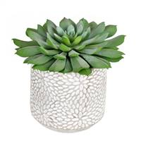 "6"" Green Potted Succulent 2/Pk"