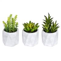 "6""  Potted Succulent (Set/3 Asst)"