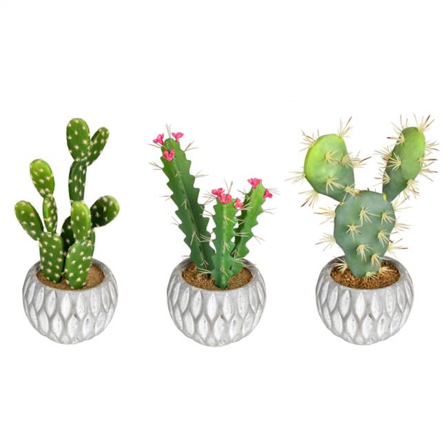 "10"" Green Potted Cactus (Set/3 Asst)"
