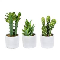 "7"" Green Potted Cactus Set of 3 Asst"
