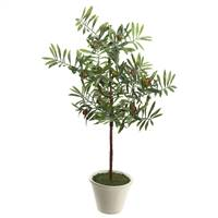 "27"" Olive Hill Tree W/ Container"