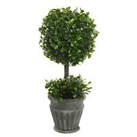 "13"" Boxwood Topiary In Container"