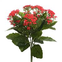 "17.25"" Red Kalanchoe Bush"