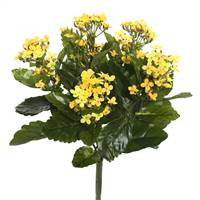 "17.25"" Yellow Kalanchoe Bush"
