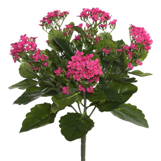 "17.25"" Hot Pink Kalanchoe Bush"