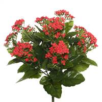 "15"" Red Kalanchoe Bush"