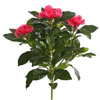 "14.5"" Beauty Gardenia Bush"