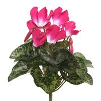 "11"" Beauty Cyclamen Bush"